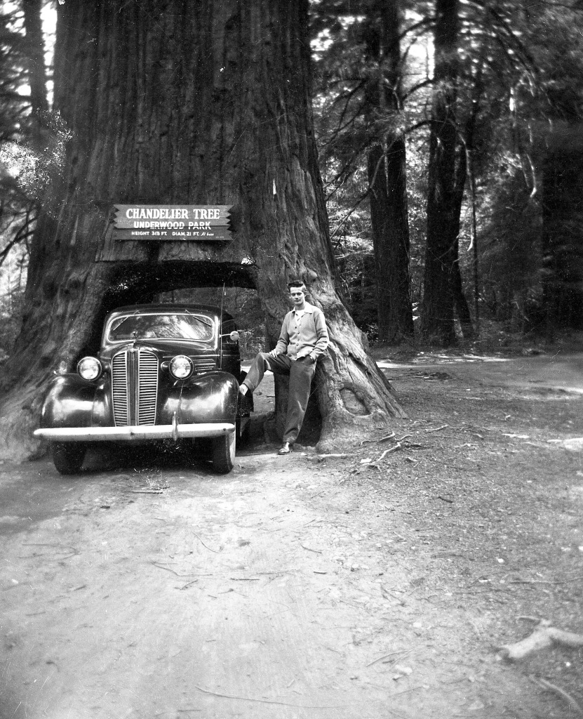 Chandelier Tree with Dad and car