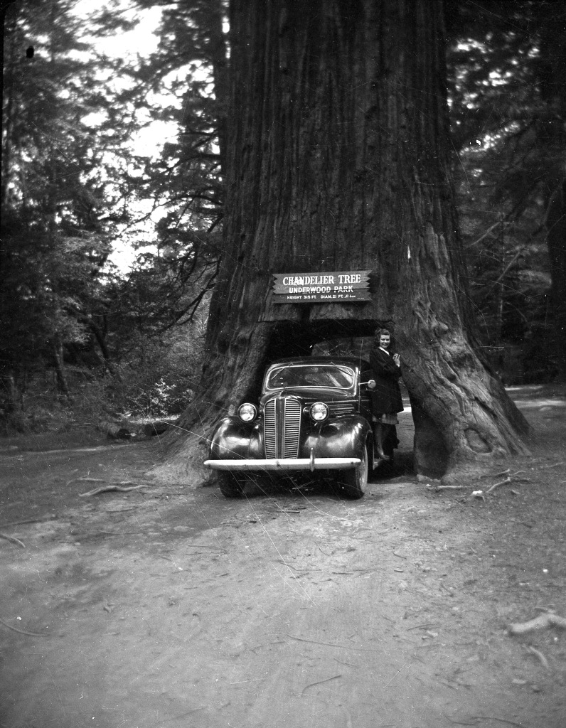 Chandelier Tree with Mom, 1948